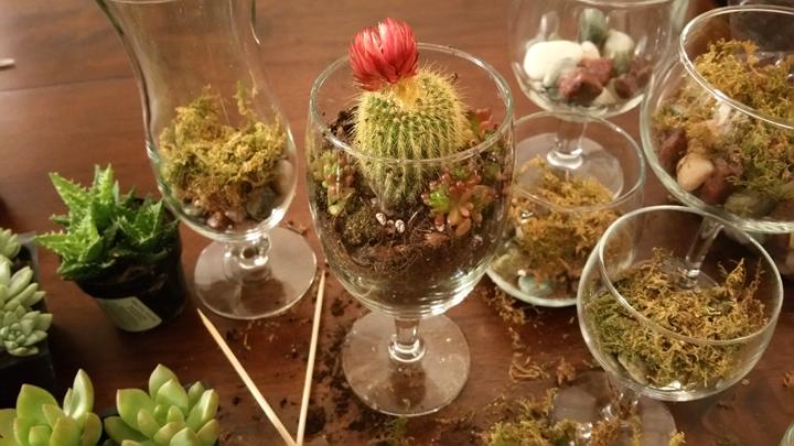 Web Cacti